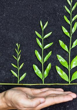Hand_holding tree arranged as a green graph on soil background
